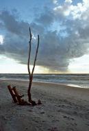 Driftwood on beach at Ahrenshoop.