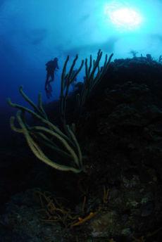 Reef Top, Maria La Gorda