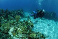 Diver in Sand Channel, Maria La Gorda