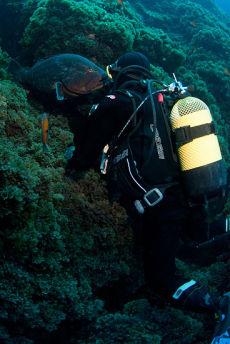Dusky Grouper Epinephelus marginatus