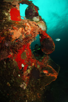 The Stern of the Quarter Wreck, Grenada