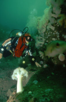 Diver at Garden Rock, Isle of Man