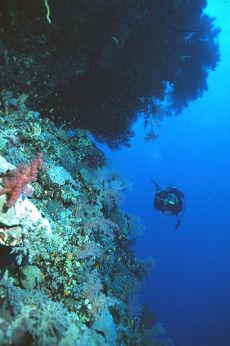Habili Wasta, Egyptian Red Sea
