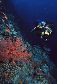 Diver on Thomas Reef, Northern Egyptian Red Sea