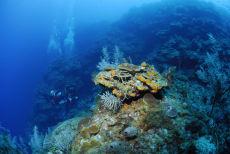 Reef Wall, Maria La Gorda, Cuba