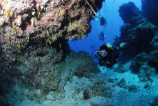 Top of the reef wall, Maria La Gorda, Cuba