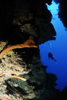 Tunnel onto the reef wall, Maria La Gorda