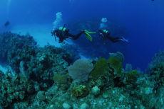 Top of the reef, Maria La Gorda