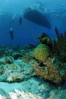 Fore-reef below dive boat, Maria La Gorda