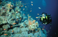 Diver on Thomas Reef