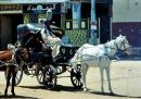Horse & Carriage, Luxor