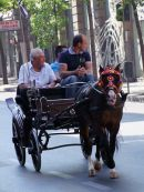 Horse & Carriage, Palermo