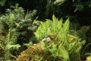 Native Fern collection- 7 ferns £33.00 including delivery!