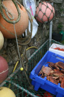 Buoys, crabs and lobsters