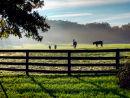 Horse Country, Virginia