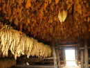 Inside tobacco drying shed