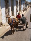 Horse & Trap, Trinidad
