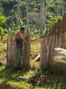 Turpentine stake fence