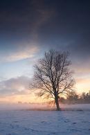 Wilow Sunset