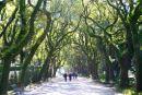 The Alameda Park