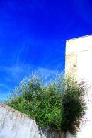 Vejer Olives