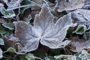 Winter_Leaves