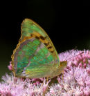 Silver-washed