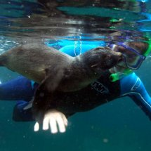SEAL PUP SWIMMING LESSON 6