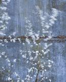Blackthorn Blur