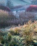 Winter Pond Colours
