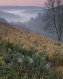 Scoar Dale Dawn Mists