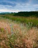 Tun Dale Grasslands