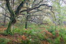 Autumn Colours in Bratt Wood