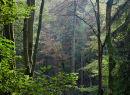 Millington Wood Sunlight