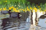 Ducks at Magdalene