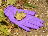 Purple Glove