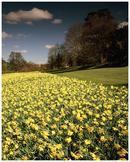 Hughenden Park, Springtime