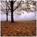 Parkland, Autumn