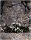 Flowers & Rock, Gower