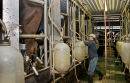 Cow milking parlour