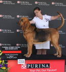 Australian Champion Farlap Cautious, winning BOB at the Sydney Royal Show (Australia) 2010