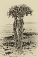 Quiver Tree